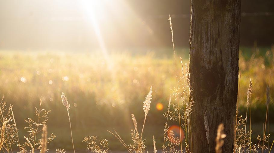 hình ảnh mùa hè đẹp, tổng hợp ảnh đẹp, hình nền đẹp