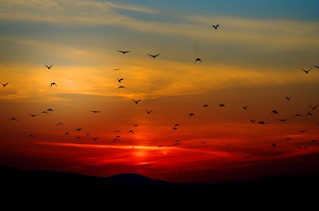 hinh nen dep cho may tinh thien nhien chim (1)