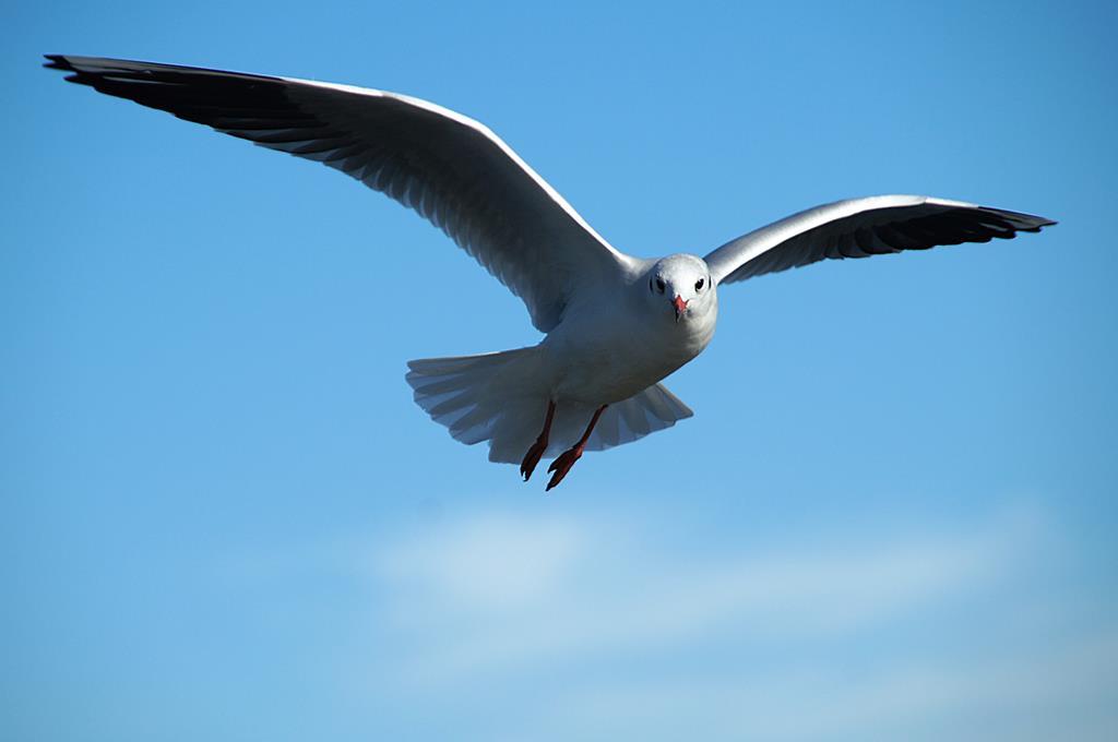 hinh nen dep cho may tinh thien nhien chim (11)