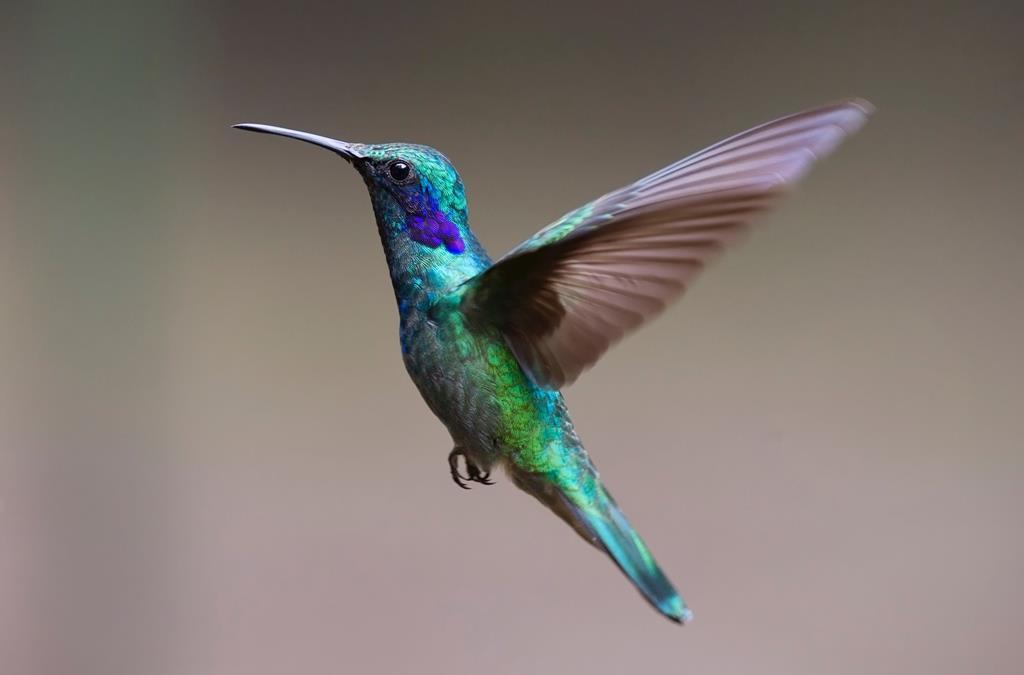 hinh nen dep cho may tinh thien nhien chim (14)
