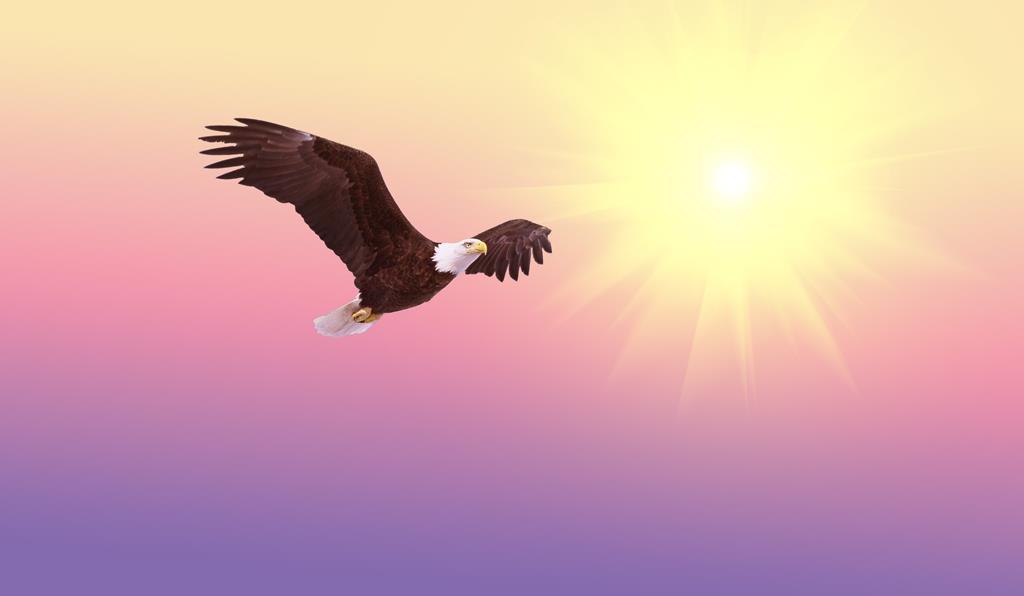 hinh nen dep cho may tinh thien nhien chim (15)
