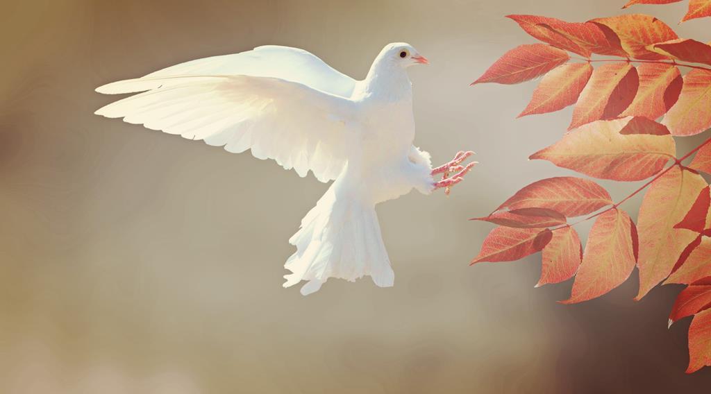 hinh nen dep cho may tinh thien nhien chim (5)