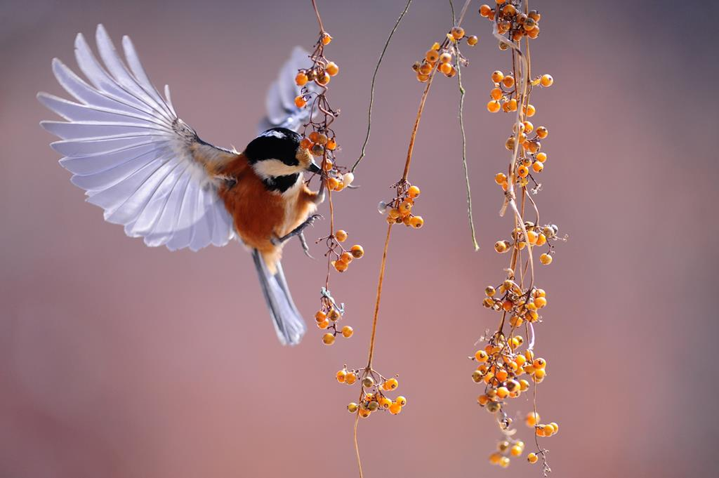 hinh nen dep cho may tinh thien nhien chim (6)