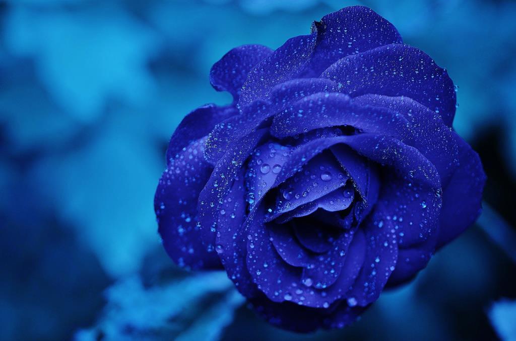 hinh nen hoa dep cho may tinh (10)