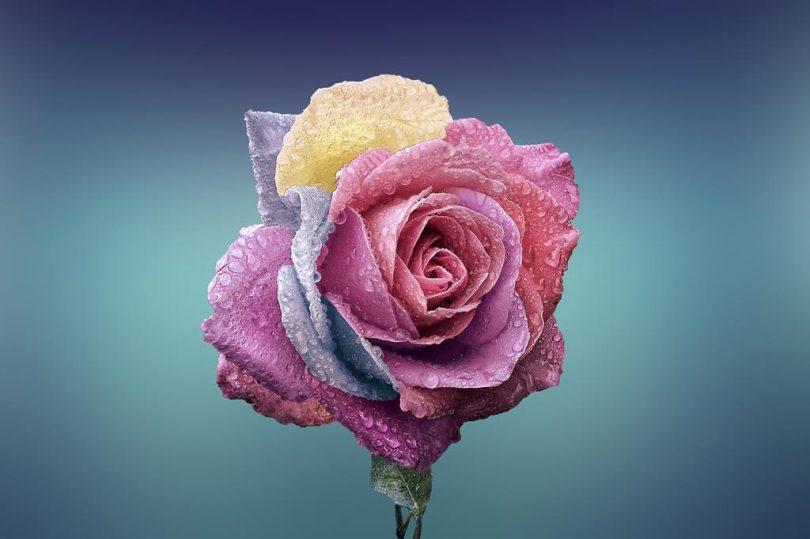 hinh nen hoa dep cho may tinh (13)