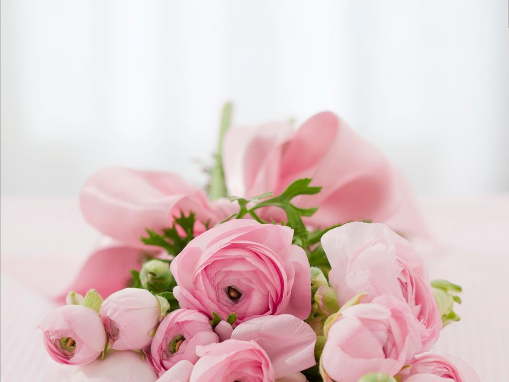 hinh nen hoa dep cho may tinh (2)