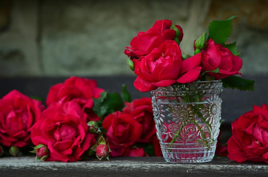 hinh nen hoa dep cho may tinh (3)