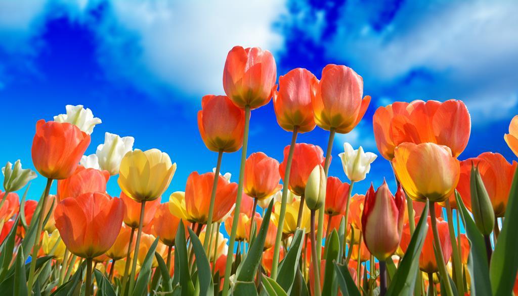 hinh nen hoa dep cho may tinh (4)