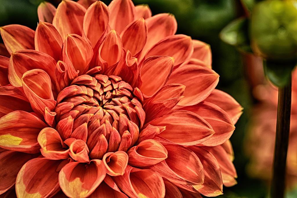 hinh nen hoa dep cho may tinh (5)