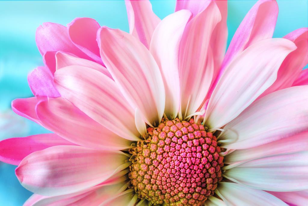 hinh nen hoa dep cho may tinh (6)