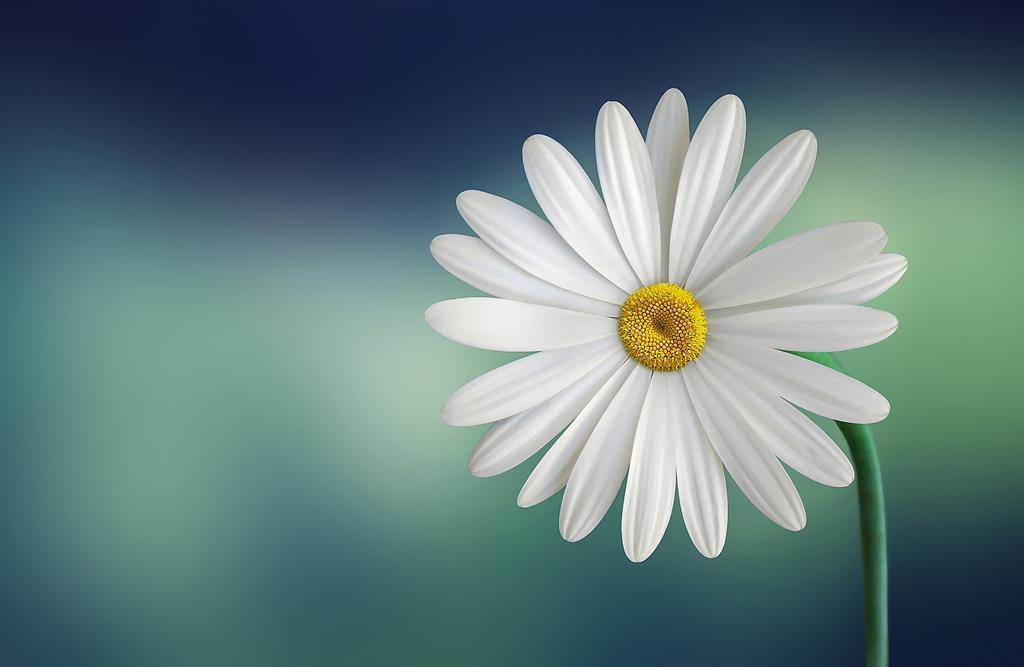 hinh nen hoa dep cho may tinh (8)