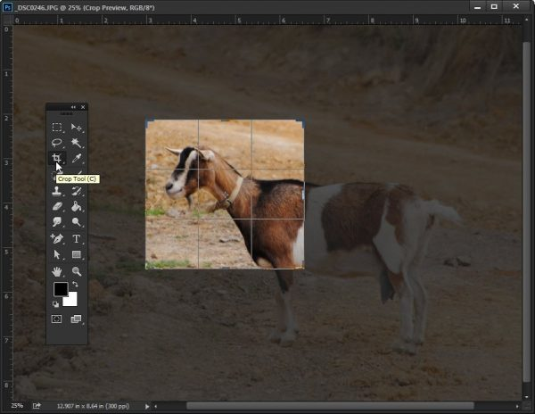 tinh-nang-Crop-Tool-trong-photoshop-cs6