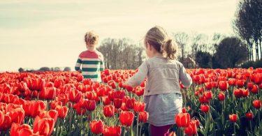 tong-hop-nhung-hinh-anh-hoa-tulip-dep-nhat (1)