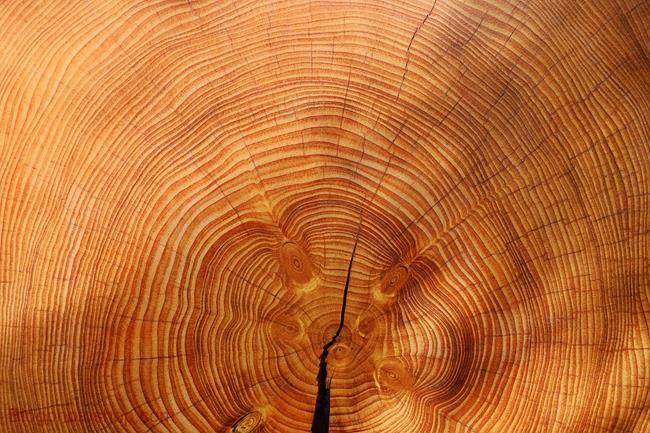 wood-texture-floor